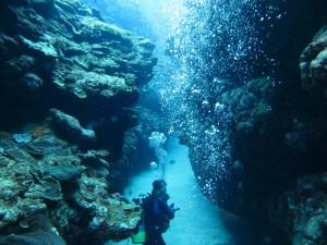 Yoronto - scuba diving in Japan