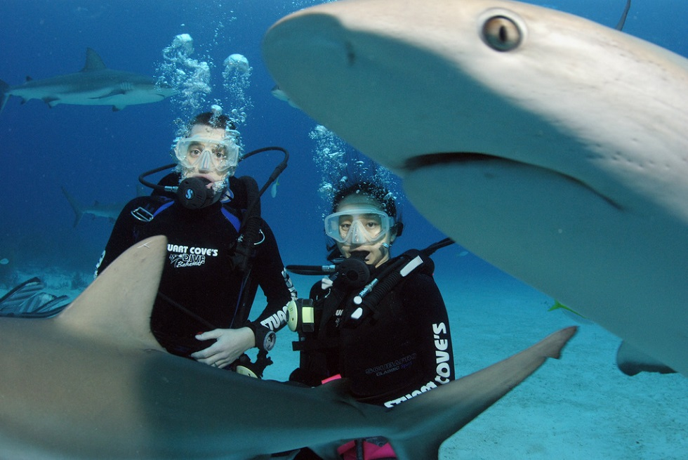 Diving Shark Couple
