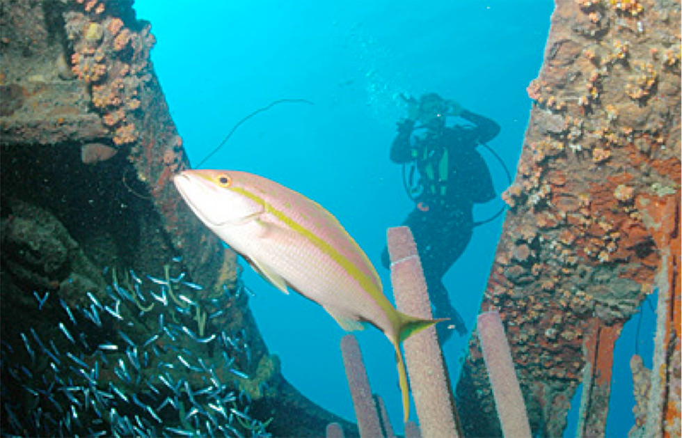 A diver at the Hilma Hooker wreck