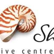 Sea Shell Dive Cove